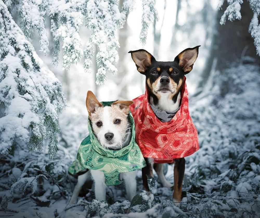 Одежда для собак, зимнее теплое ветрозащитное пальто, утепленная одежда для домашних животных, костюм для собак, комбинезон, куртка, лыжный костюм, товары для домашних животных, собак-4