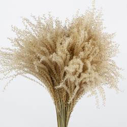 Натуральный маленький Рид букет из сушеных цветов гостиной декоративный цветок для дома дикий конский хвост венчик Цветочная композиция с
