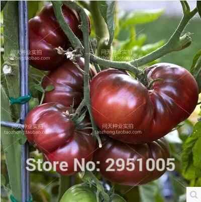 ホット販売レア黒野菜、 100 ピース/ロットトマト家宝野菜ダーク & おいしい送料無料 # A022