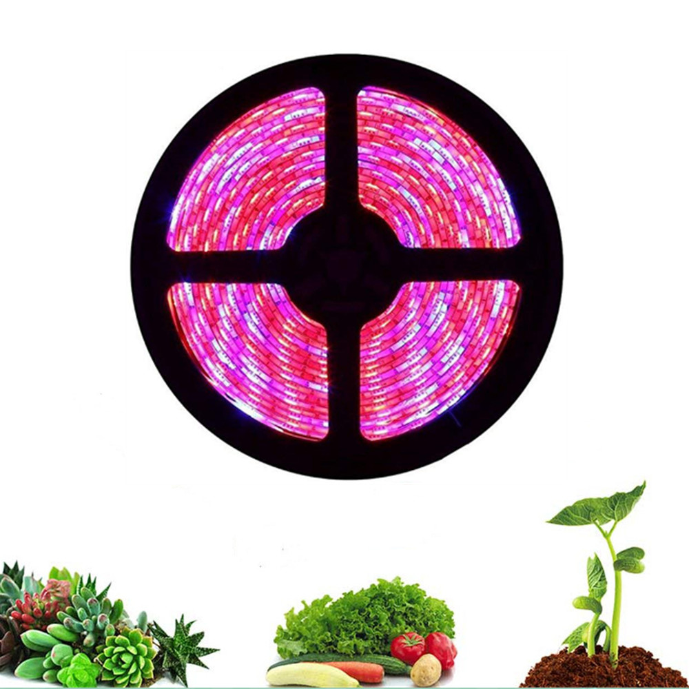 led grow light strip 5M 5050 Full Spectrum Flower Plant Phyto Growth lamp for indoor Greenhouse Hydroponic grows lights 12V tent image