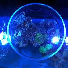 Аквариумный морской рифовый резервуар SPS LPS Коралловое Зеркало для наблюдения. Фото зеркало кораллового аквариума