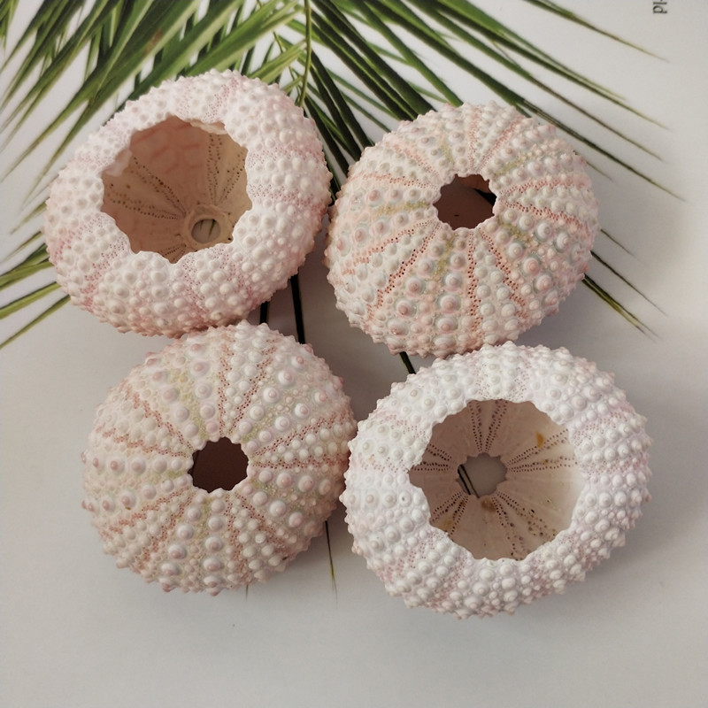 3pcs/lot Natural Small Pink Sea Urchin Natural Shell Conch Beach Wedding Decoration Coastal Home Decoration Sea Conch