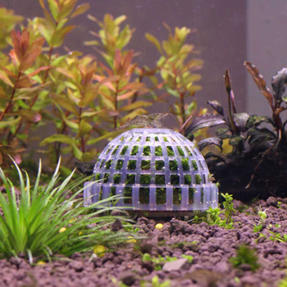 Marimo מוס כדור מסנן לחיות צמחי אקווריום דגי טנק שרימפס מחמד דקור אספקת חי צמח בעל