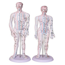 50CM Male Lettering acupuncture point body mannequin of acupuncture, Medical Research massage reflex zone teaching model C518