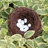 6cm nest