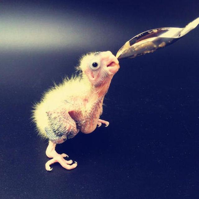 5 Pcs Baby Bird Pointed Feeding Spoon Stainless Steel Milk Medicine Parrot Feeder for All Baby Bird Peony Cockatiel 3