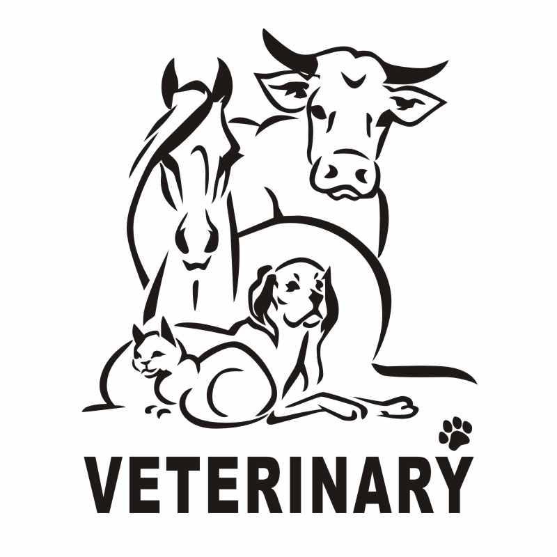 Dctal cão gato veterinário pet shop adesivo decalque posters vinil parede arte decalques decoração mural pet shop adesivo