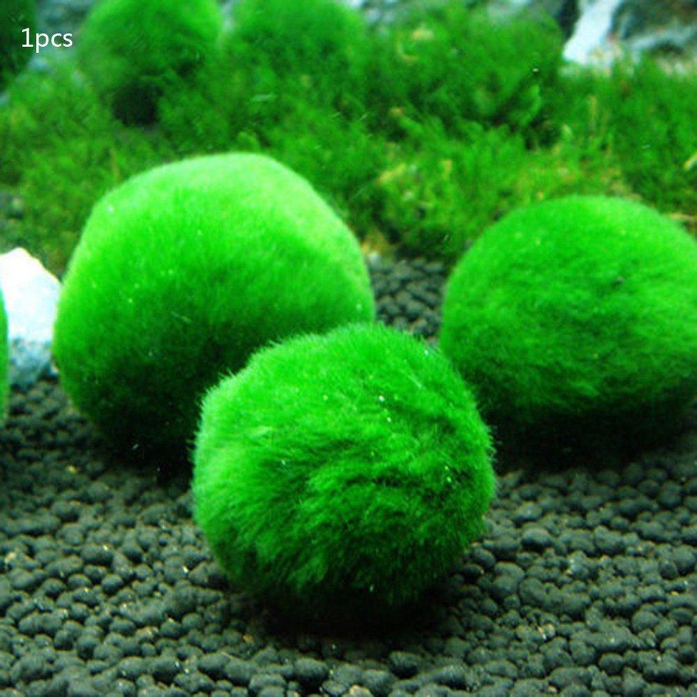 Green Algae Ball Aquarium Landscaping Decoration Real Water Grass Seed Plants Live Seaweed Ball Lazy Algae Ball(China)