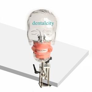 Image 3 - Head Model Dental simulator4000074621961 phantom head model with new style bench mount for dentist teaching model