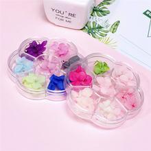 6 цветов/коробка высушенные цветы дизайн ногтей 3d сделай сам