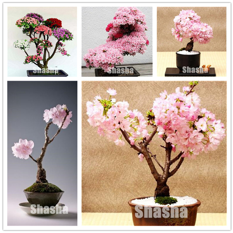 10 Pcs Artificial Sakura