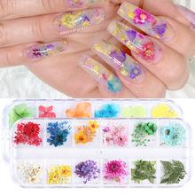 1 коробка 3d высушенный цветок для ногтей украшение из натуральных