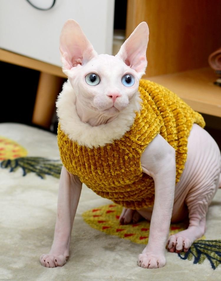 quente colete outono inverno sem pêlos gato esfinge roupas de gato