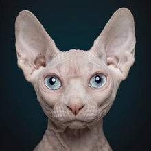 Ramical fenbendaz0le comprimidos para gato/cão matar schistosome cisticercus tênia roundworm trichoderma elegans nematode 100mg
