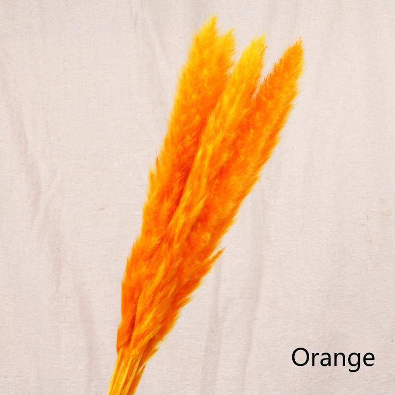7pcs-Orange