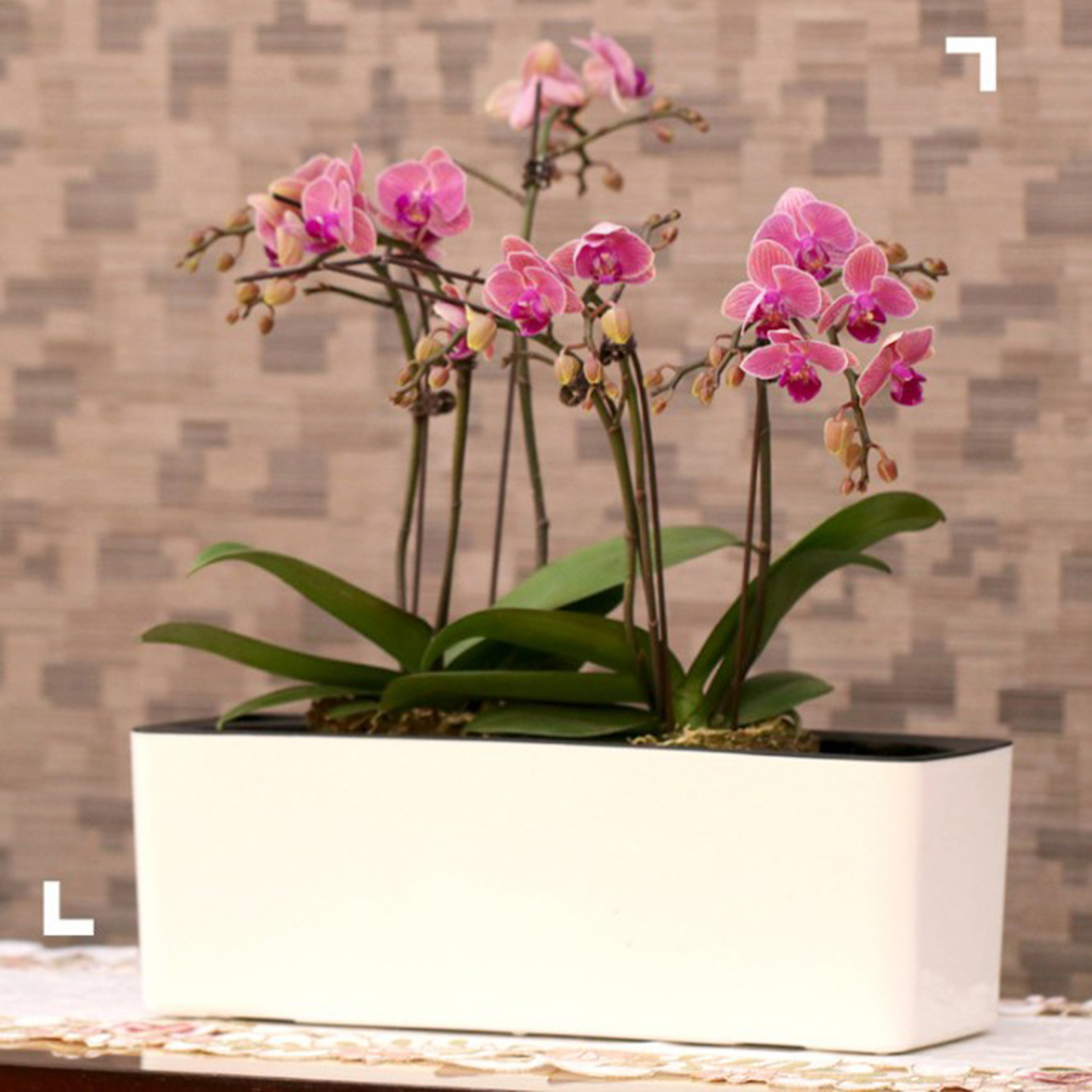 39cm Detachable Self Watering Houseplant & Herb Indoor Rectangular Planter Pot For Home Garden Window Office Shop Ornament
