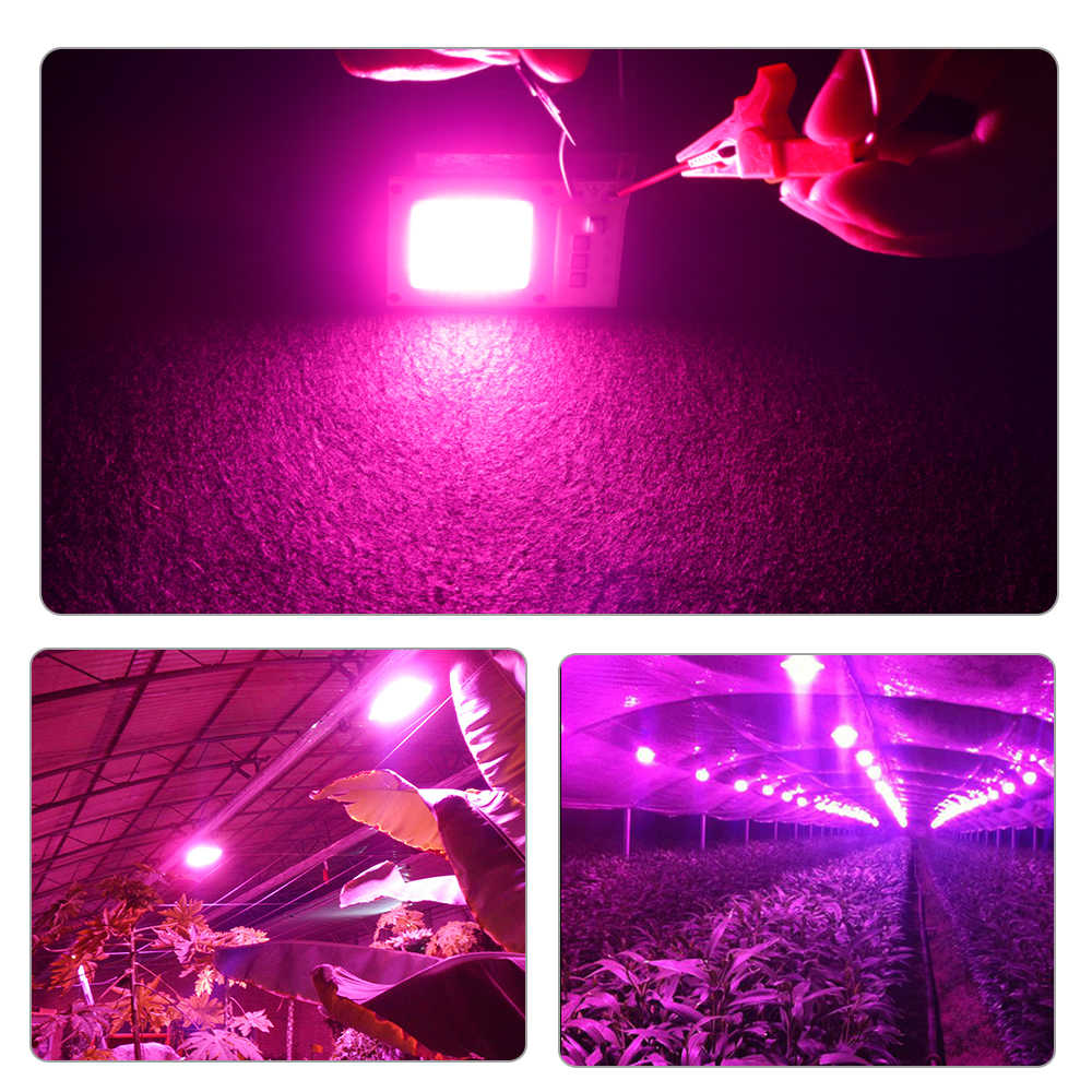 COB oświetlenie led do uprawy Chip pełne spektrum AC 220V 110V 20W 30W 50W lampa do uprawy roślin dla roślin namiot do domowej uprawy roślin sadzonka lampa W kształcie kwiatka