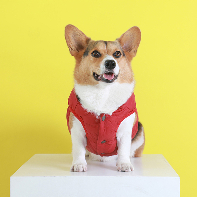 winter pet jacket coat clothes for dogs winter clothing warm фотография