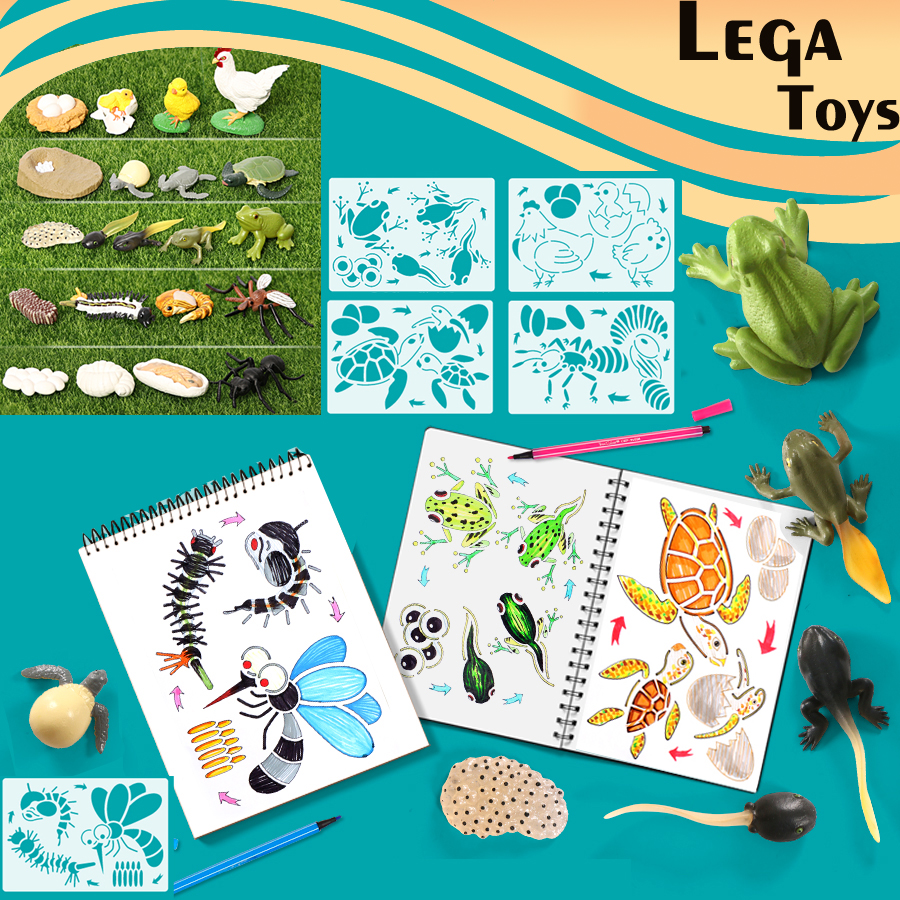 Montessori Chicken,Turtle,ants,Frog,Mosquito Life Cycle Animal Drawing Stencils And Figurines Model Set Educational Toys