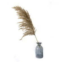 Free shipping 20 pcs wedding flower bunch natural dried reed pampas Grass raw color home decor phragmites communisg