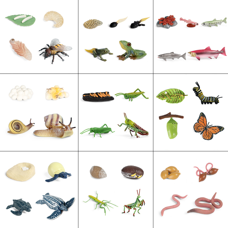 Simulation Animals Growth Cycle Model Cock Locust Earthworm Snail Action Figures Figurine Lovely Baby Gift Educational Kids Toys