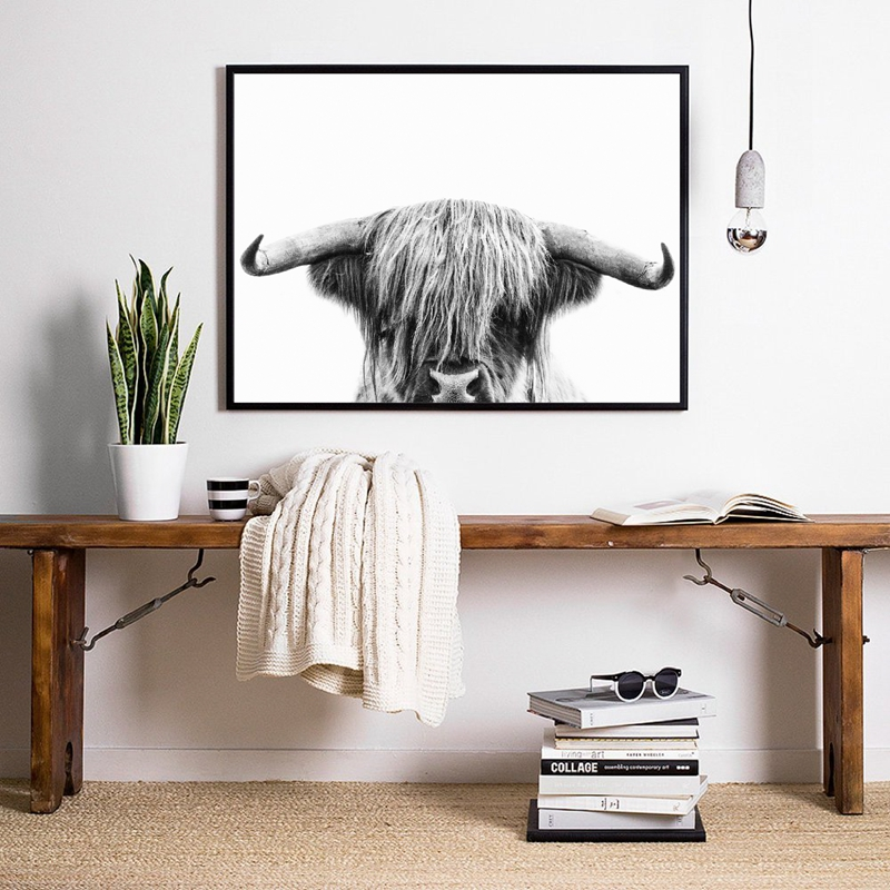 Highland Cow Canvas Prints