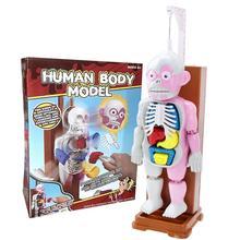 4D Assembled Model Human Body Model Educational Toys Desktop Game Model For Kids Children Scientific Biological Toy