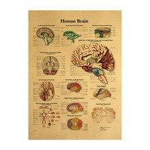 Ilustración de cuerpo humano-Papel Kraft de cerebro póster Vintage decoración de sala de clase de museo pintura suministros para el hogar