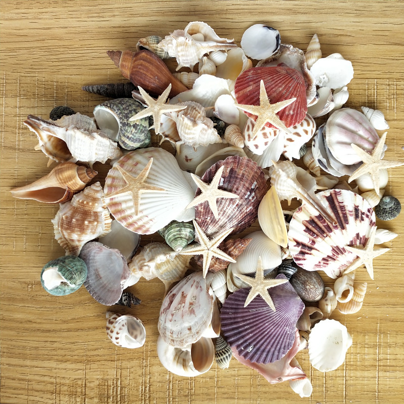 100PCS Mixed Ocean Sea shells Wedding Decor Beach Theme Party, Seashells Home Decorations, Fish Tank, sea star 3