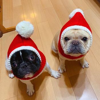 Zabawna świąteczna czapka dla psa czerwona elastyczna czapka zimowa ciepła kot domowy pies święty mikołaj kapelusz Rocheted Snood Winter Pet Knit nakrycia głowy dla zwierząt domowych tanie i dobre opinie Stałe 100 bawełna
