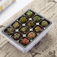 10 Sets Seed Trays 120 Cells Seedling Starter Tray Garden Plant Germination Kit Seed Starting Tray with Dome and Base  Hand Tool|Nursery Pots| |  -