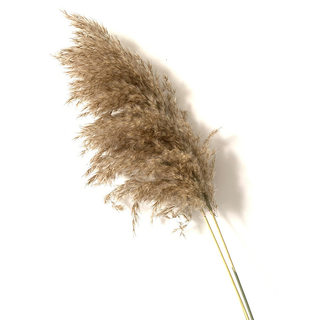 20 pcs Natural Dried Pampas Grass Phragmites Communis,Wedding Flower Bunch 50 55 cm Tall for Home Decor Rated dried flowers