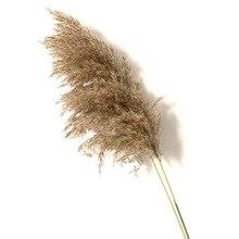 20 pcs Naturale Secca Pampas Erba Phragmites Communis, fiore di cerimonia nuziale Mazzo 50 55 centimetri di Altezza per il Complementi Arredo Casa Nominale fiori Secchi