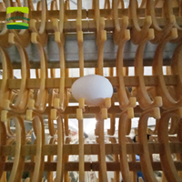 Eggs collecting belt automatic egg collector poultry egg collection system poultry farming equipment Large laying hen farm