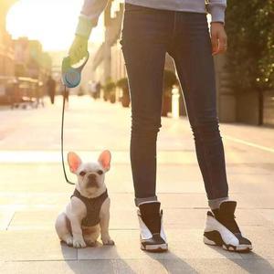 Image 3 - YouPin PETKIT rétractable laisse pour animaux de compagnie chien Traction corde Flexible anneau forme 2.6m avec Rechargeable LED veilleuse