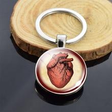 Брелок для ключей с анатомическим сердцем, металлический брелок из стекла, брелок для ключей, знак сердцебиения, подвеска, биологи, медики, п...
