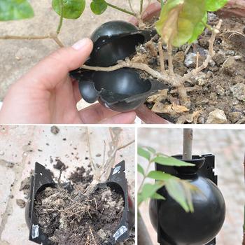 5 sztuk wielokrotnego użytku roślin zakorzenienia Ball szczepienia zakorzenienia uprawy pole hodowli przypadku ogród hodowli powłoki roślin propagacji kiełkownik tanie i dobre opinie CN (pochodzenie) Plant Rooting Box Z tworzywa sztucznego Nie powlekany Nursery Trays Lids S-5 cm M-8 cm L-12 cm Plant Rooting Equipment