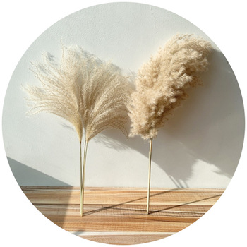8pcs/10pcs/20 Pcs real dried small pampas grass wedding flower bunch natural plants decor home decor dried flowers Free shipping