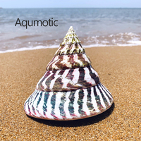 Aqumotic Snail Turritella Shells Rare Specimens Big 1pc about 12cm Large Natural Sea Shell Fish Tank Landscaping Fossils|Shells & Starfishes|   -