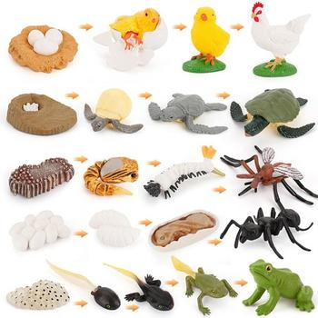 Simulation Animals Life Cycle Early Education Cognitive Toys Animal Figurines Frog/Ant/Mosquito/Sea Turtle/chicken Models Toy