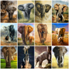HUACAN Oil Painting Animals DIY Pictures By Number Elephant Home Decoration Wall Art Canvas For Adult Framess