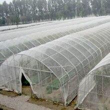 Filet de lutte antiparasitaire, 5m 100 mailles, filet de Protection pour les plantes, légumes et fruits, filet de Protection de serre, anti moustiques