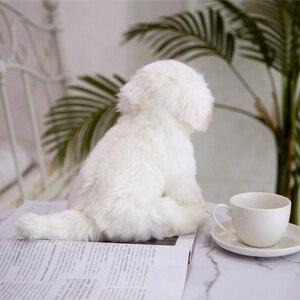 Image 5 - חדש באיכות גבוהה סימולציה מלטזית כלב בפלאש צעצוע רך קריקטורה בעלי החיים כלב ממולא בובת עיצוב הבית תינוק ילד מתנת יום הולדת