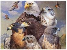 Pintura de pájaro diamante águila animal completo Diamante de imitación bordado cuadro mosaico póster diamante arte dibujo para pared pegatina Decoración(China)