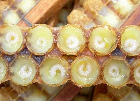 蜂王浆 1
