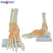 Эластичная модель кости для ног человека универсальный размер