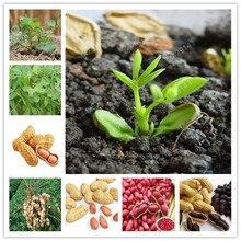 10 шт./пакет красного арахиса Китайский органический чай растительное посадка в помещении бонсай сад цветочные горшки для домашнего декора сада легко растить