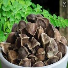 100 шт-1000 шт высокое выживаемость Семена Моринги семена Моринги снижение уровня холестерина укрепление иммунитета потеря веса формирование