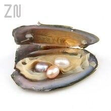Individualmente envolvido ostras com grande pérola natural de água doce pérola presentes mexilhões de diferentes quantidades de pérolas