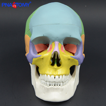 adult skull model colored 3 parts natural size skeleton system for study medical model human anatomy for art teaching resources колесников л л никитюк д б клочкова с в textbook of human anatomy volume 3 nervous system